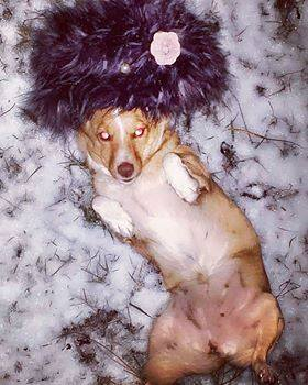 """DOBITNICI NAGRADA Petface foto konkursa """"Zima, Zima – Pa Šta!"""""""