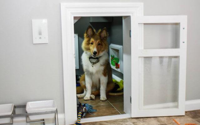 psa samog u kuci petface