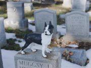 groblje za pse petface