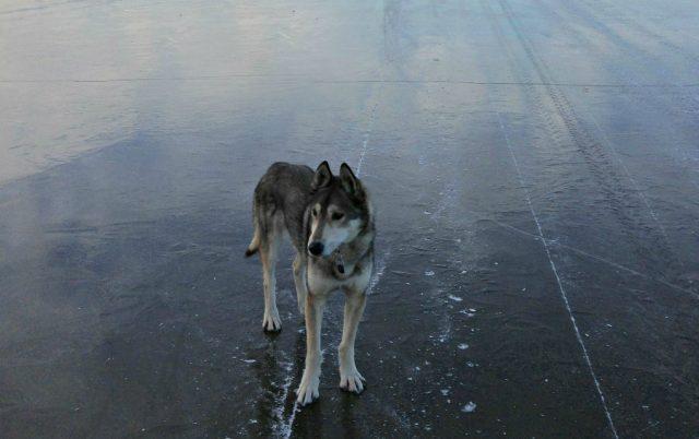 led pod njegovim nogama pukao petface