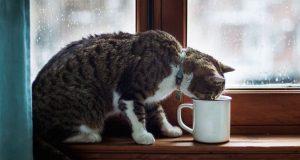 otrovna hrana za macke petface