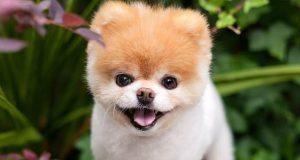 pas na svetu petface