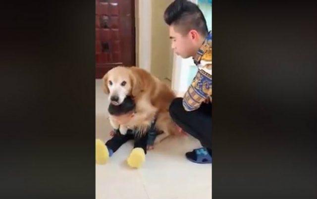 pas skocio u odbranu petface