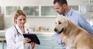 pitati svog veterinara petface