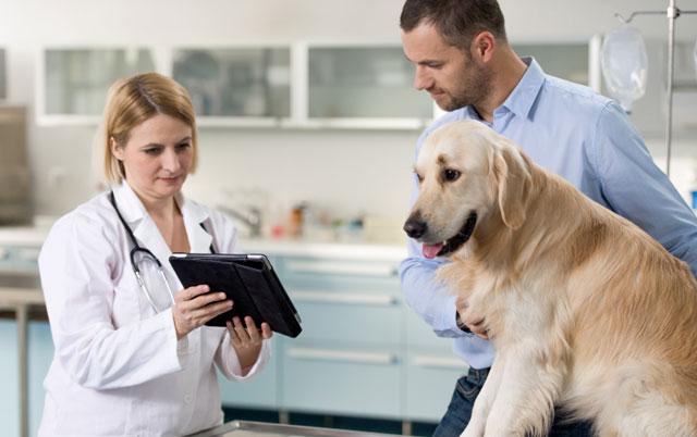 Šta OBAVEZNO treba da PITATE svog veterinara?