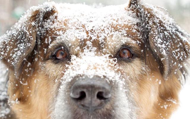 zasto psi jedu sneg petface