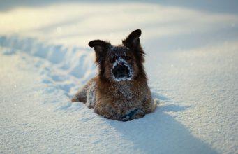 zablude o snegu i zimi petface