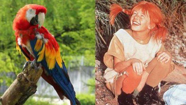 Papagaj Daglas petface