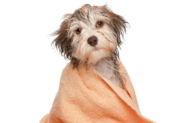 kupanja psa petface