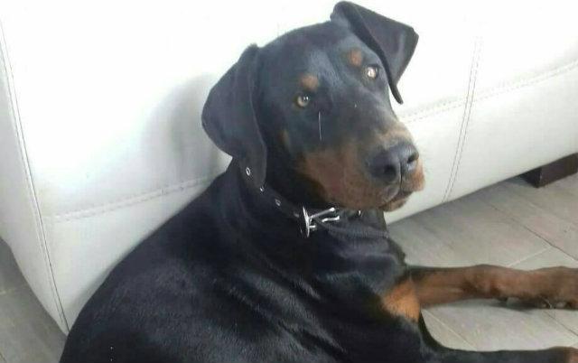 najnezeljeniji pas u beogradu petface