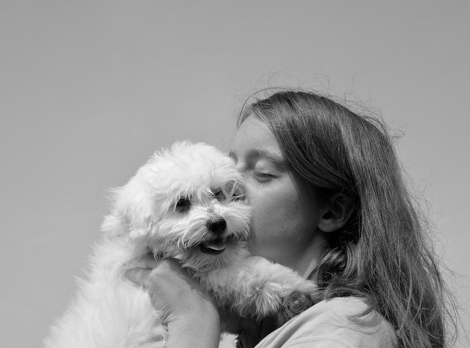 psi bolji od ljudi petface
