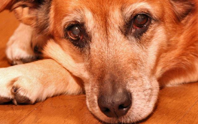 psi prolaze kroz menopauzu petface