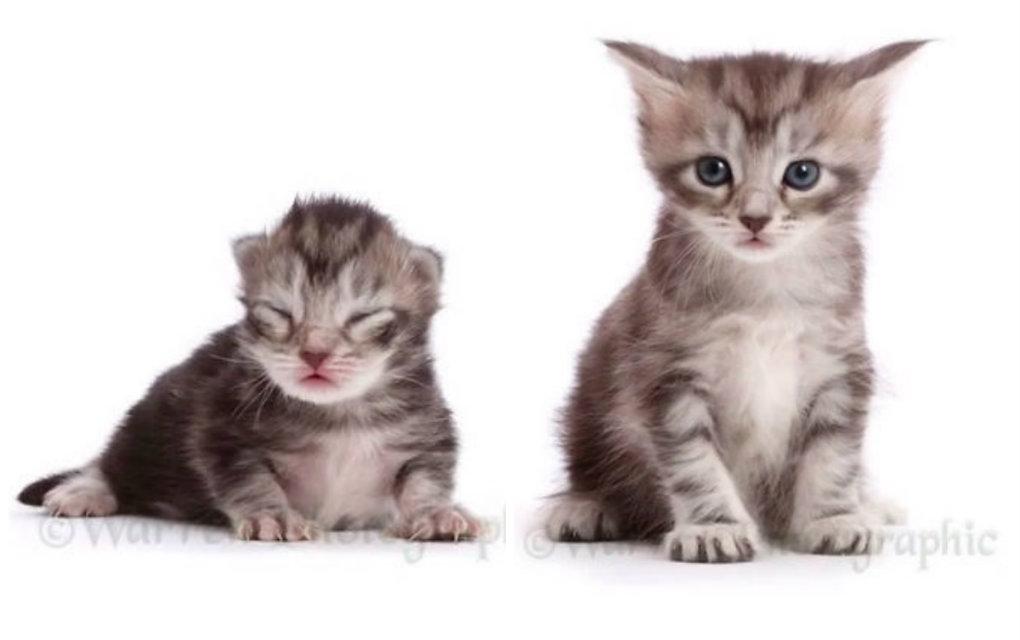 Slike slatkih crnih maca