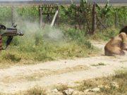 snimak ubistva lava petface