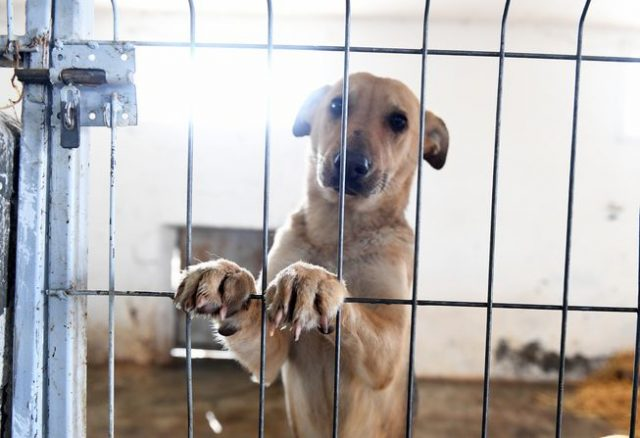 azil za pse u Bačkoj Palanci petface