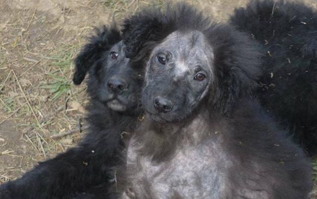 beogradski vukodlaci petface