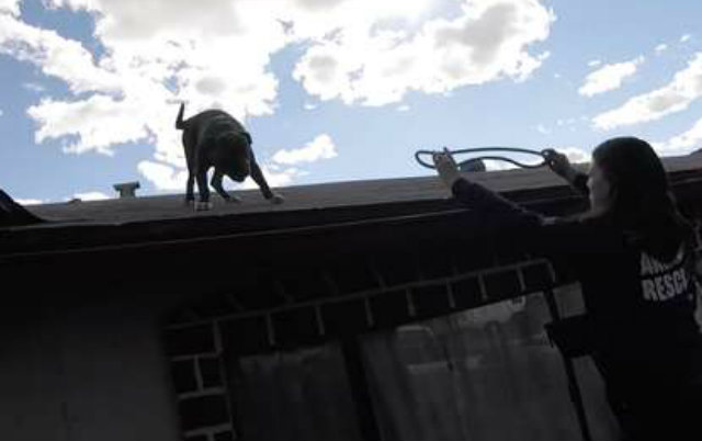 kako je dospeo na krov petface