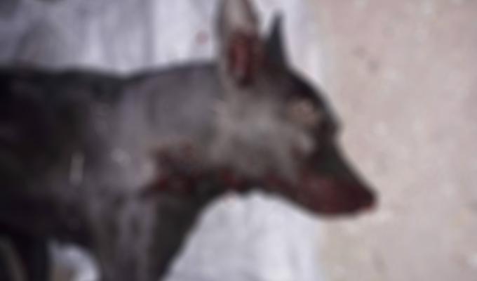 palicom tukao vlasničkog psa petface1