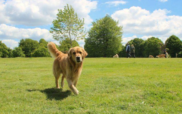 parkovi za pse u subotici petface