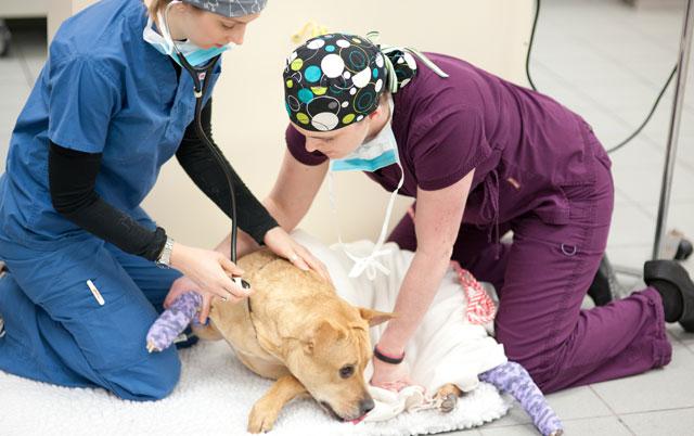 hirurske intervencije petface