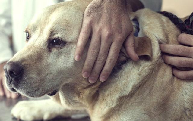 mobilnu veterinarsku ambulantu petface