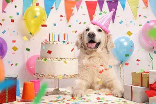 proslavite rodjendan svog psa petface
