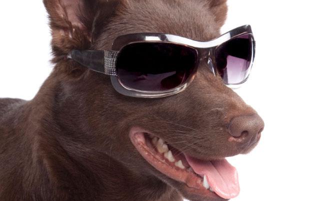 zivot sa slepim psom petface