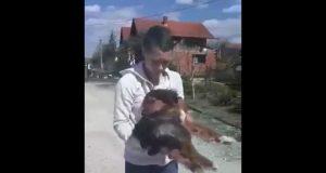 Pas pretučen petface