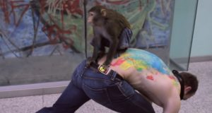 majmunova umetnost petface