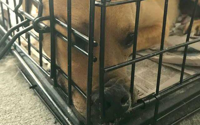PRETUŽNA FOTOGRAFIJA: Pas slomljenog srca, ne želi da izvadi glavu iz ćoška, odbija hranu! (VIDEO)