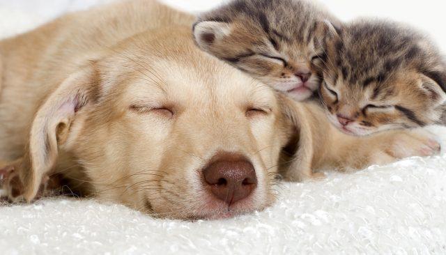 psi bolji od mačaka petface