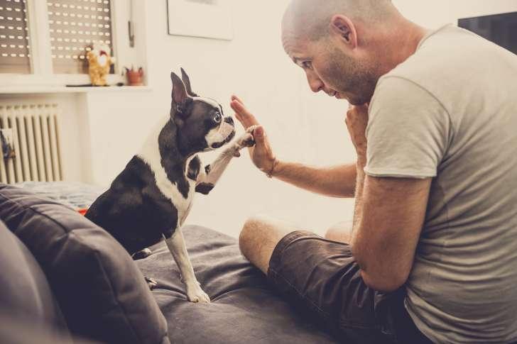 razgovarate sa psom petface