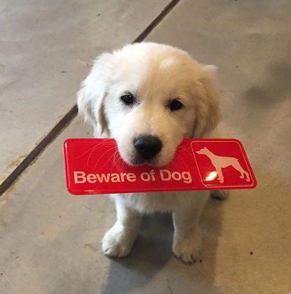 cuvaj se opasnog psa petface