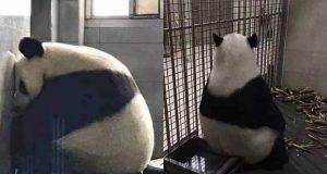 dan jedne pande petface
