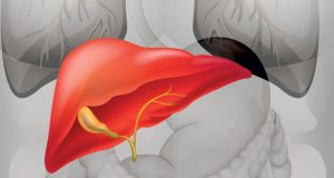 bolesti jetre kod pasa petface