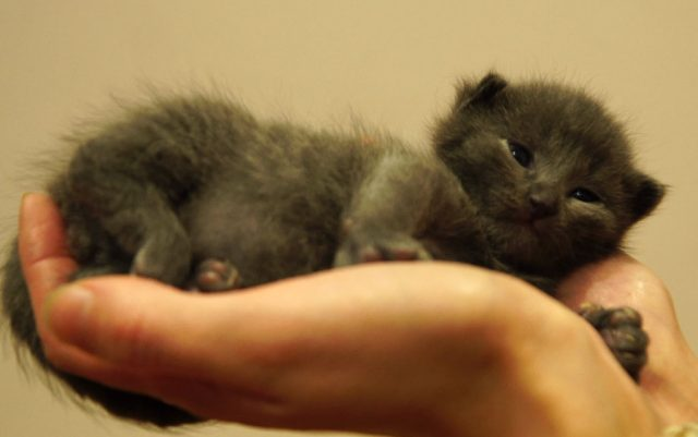 rodjenim macicima petface
