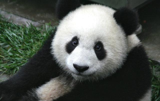 pande dobijaju nacionalni park petface