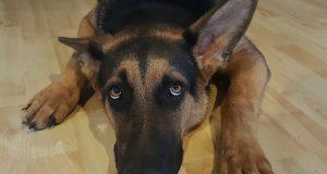 psa kako pati petface
