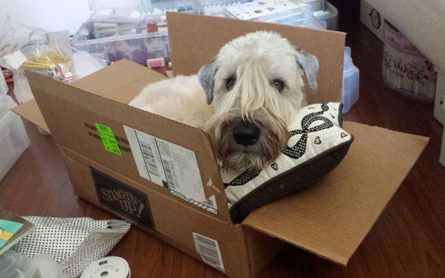 kako preseliti psa petface