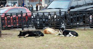 unisteni zivoti tri psa petface