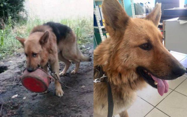 secate se najnesrecnijeg psa u srbiji