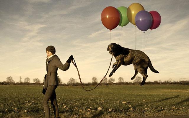 najbolji psi za lenje ljude petface