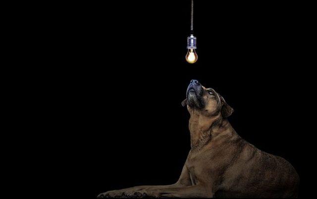 da li ostaviti psa u mraku petface
