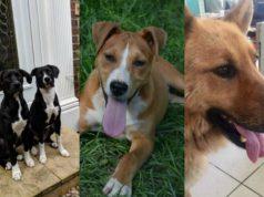 najsrecnijih pasa srbije petface