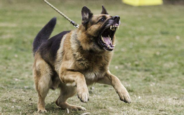 drugi pas napadne petface