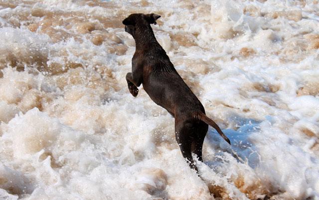 psi na plazi petface