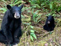 ubijen medved petface