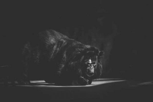 jezive fotografije iz zoo vrta petface