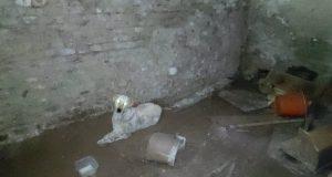 pas zarobljen u podrumu petface