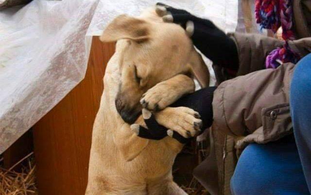 ovako pas place petface